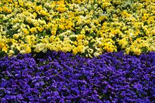 Free Flower Land Royalty Free Stock Photo - 4937195