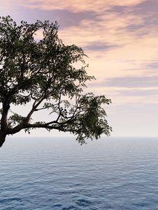 Free Old Tree Royalty Free Stock Photo - 4937375
