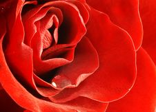 Free Close Up Shot Of Red Rose Stock Images - 4938374