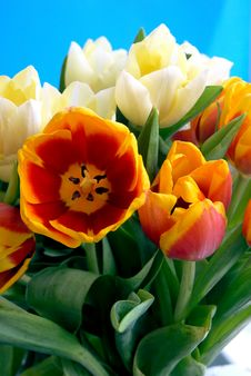 Free Tulips Royalty Free Stock Image - 4939006