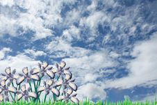 Green Field With Iris Flowers On A Sky Background Royalty Free Stock Images