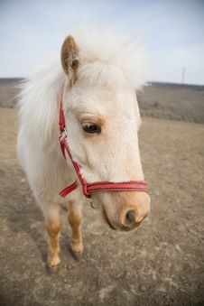 Free Portrait Of A Sad White Horse Stock Image - 4939721