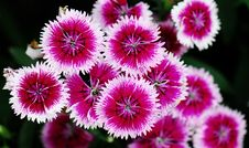 Free Flower Royalty Free Stock Images - 4939999