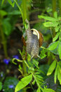 Free Snail On The Branch Royalty Free Stock Photo - 4943375