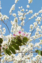 Free Blossoming Tree Stock Images - 4945024