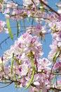 Free Blossoming Tree Stock Photo - 4945060