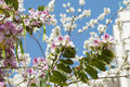 Free Blossoming Tree Royalty Free Stock Image - 4945076