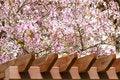 Free Blossoming Tree Stock Photos - 4945173