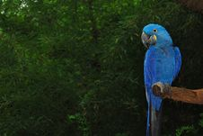 Free Blue Parrot Royalty Free Stock Image - 4940666