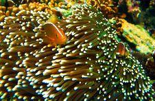 Free Fish Royalty Free Stock Image - 4940966