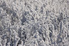 Free Winter Plant Stock Image - 4941021