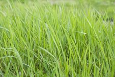 Free Grass Stock Photography - 4941392