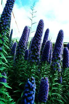 Free Purple Flower Garden Stock Photos - 4942543