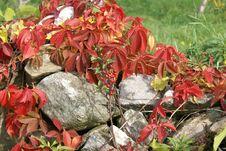 Free Overgrown Rock Wall Stock Photos - 4943633