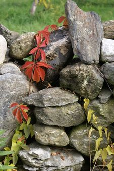 Free Climbing Plant On Rock Wall Stock Images - 4943664