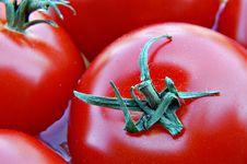 Free Fresh Ripe Tomatoes Stock Images - 4943674