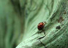 Free Lady Bug On Statue Royalty Free Stock Images - 4944239