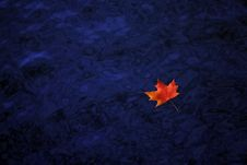 Free Colorful Fall Leaf On Water Stock Images - 4944294