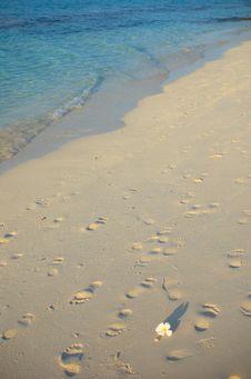 Free Tropical Beach Stock Image - 4944571