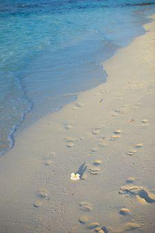 Free Tropical Beach Stock Photo - 4944610