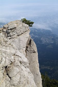 Tree On The Cliff. Stock Images