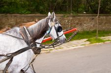 Free The Horse-drawn Carriages At Princess Islands Stock Photo - 4946390