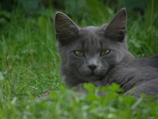 Free Cat In The Grass Royalty Free Stock Photo - 4948635