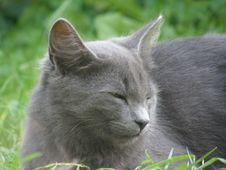 Free Sleepy Cat In The Grass Stock Photo - 4948650