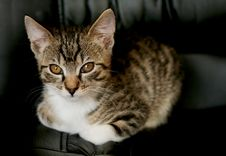 Free Cat Looking From Below Stock Photography - 4948672