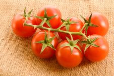 Free Tomatoes On Canvas Royalty Free Stock Photos - 4948828