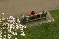 Free Bench In A Park Royalty Free Stock Images - 4949849