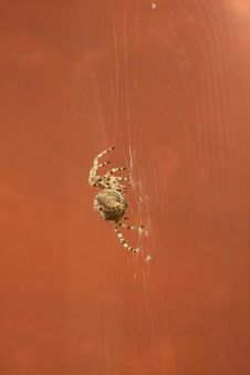 Little Spider Stock Images