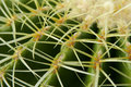 Free Cactus Close Up Royalty Free Stock Photo - 4959885