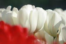 Petals Royalty Free Stock Photo