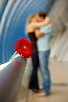 Free The Lovers And Gerbera Stock Photography - 4951662