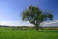 Free Tree With Grass Royalty Free Stock Photo - 4951805