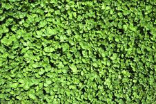 Free Green Leaves Background Stock Photography - 4952592