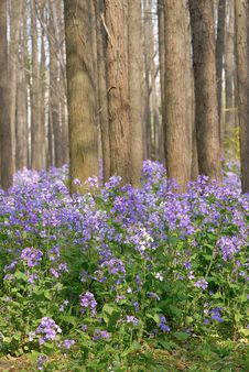 Free Purple Flower In The Forest Stock Photo - 4952620