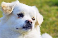 Free Amicable Dog Stock Photo - 4952650