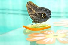 Live Butterfly Stock Images