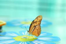 Free Live Butterfly Stock Photos - 4952993