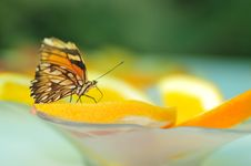 Free Live Butterfly Royalty Free Stock Photo - 4952995