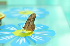 Live Butterfly Stock Image