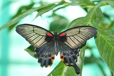 Free Live Butterfly Royalty Free Stock Photo - 4953015