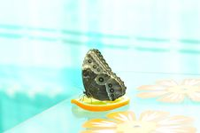 Free Live Butterfly Stock Photos - 4953053