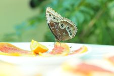 Free Live Butterfly Royalty Free Stock Photos - 4953068