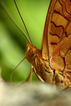 Free Butterfly Stock Photos - 4953083