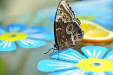 Free Live Butterfly Royalty Free Stock Image - 4953086