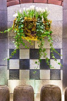 Free Hanging Plant Basket Royalty Free Stock Images - 4953159