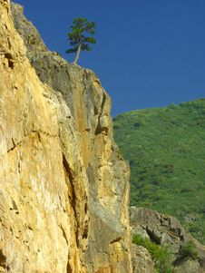 Free Lone Pine On Cliff Royalty Free Stock Image - 4953226